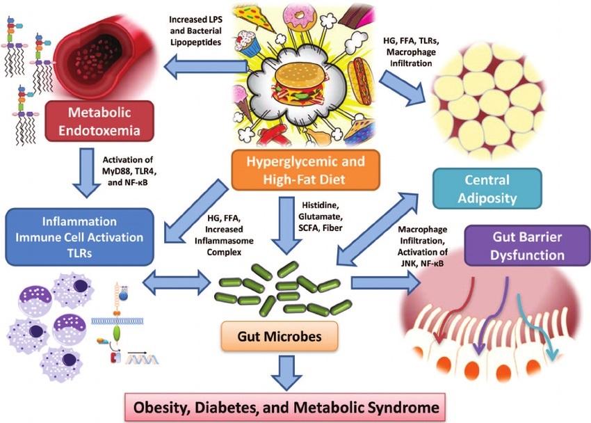 Diseases chronic
